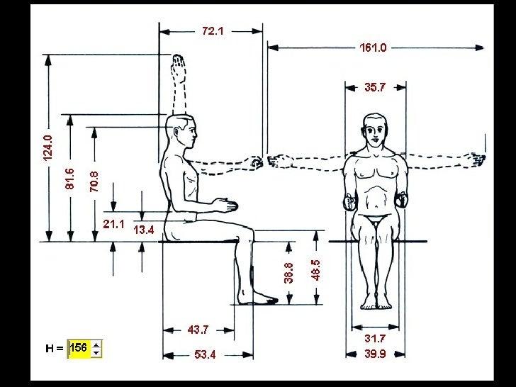 Medidas Antropometricas Sentado Pictures To Pin On
