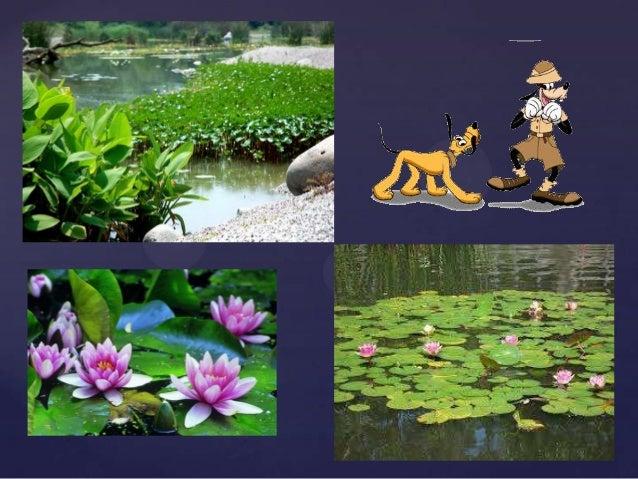 El Habitat De Las Plantas  Lessons  TES