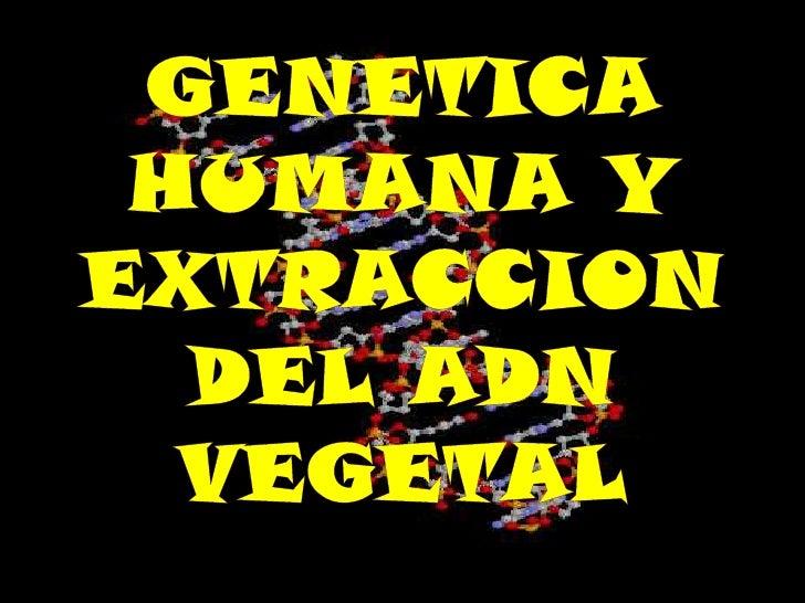 La genética humana describe  el estudio de la herencia    biológica en los sereshumanos. La genética humana   abarca una v...