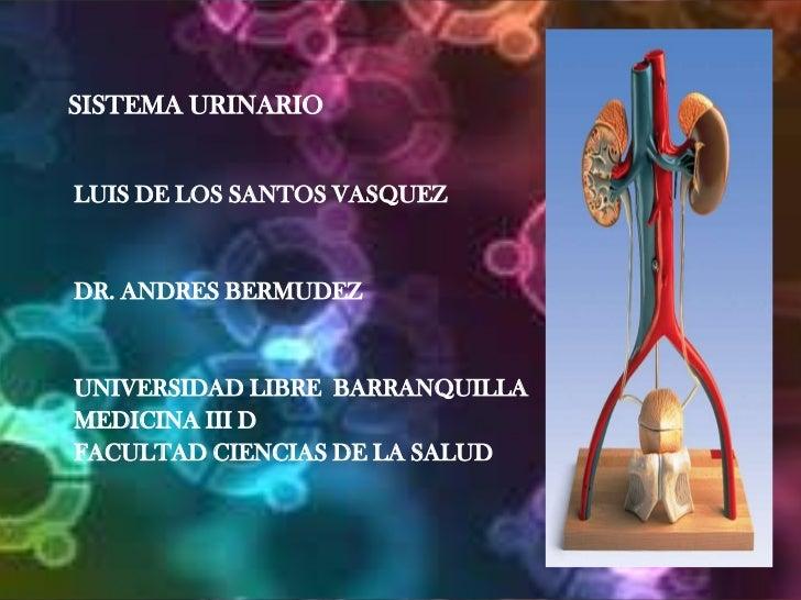 SISTEMA URINARIO<br />LUIS DE LOS SANTOS VASQUEZ<br />DR. ANDRES BERMUDEZ<br />UNIVERSIDAD LIBRE  BARRANQUILLA<br />MEDICI...