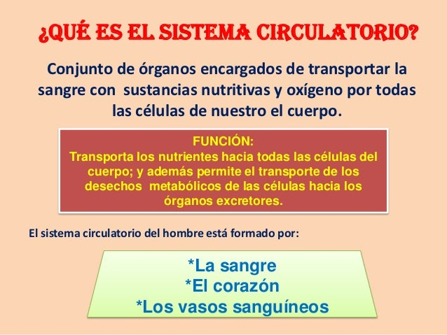 Diapositivas del Sistema Circulatorio