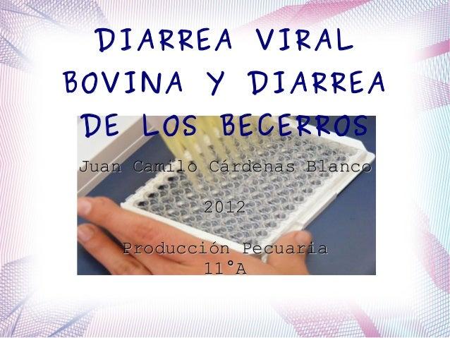 DIARREA VIRALBOVINA Y DIARREADE LOS BECERROSJuan Camilo Cárdenas Blanco           2012   Producción Pecuaria           11°A