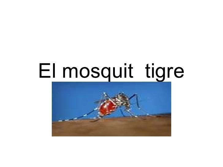 El mosquit  tigre