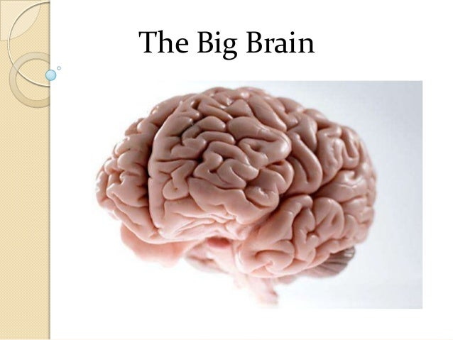 The Big Brain