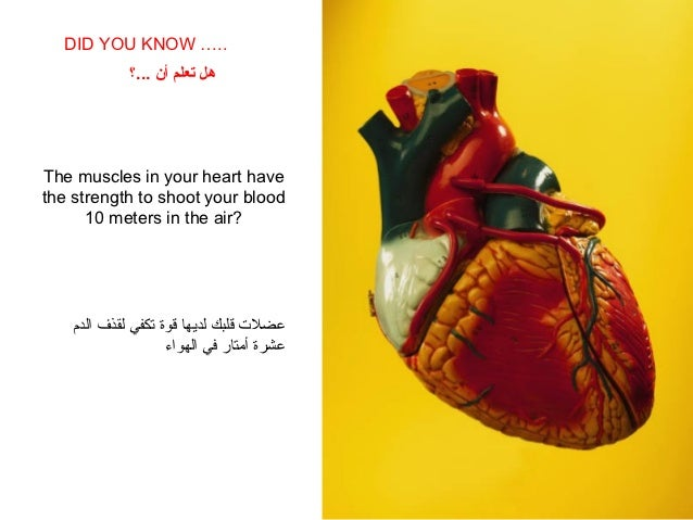 DID YOU KNOW …..    SABIAS QUE…             هل تعلم أن ...؟The muscles in your heart havethe strength to shoot your bloo...
