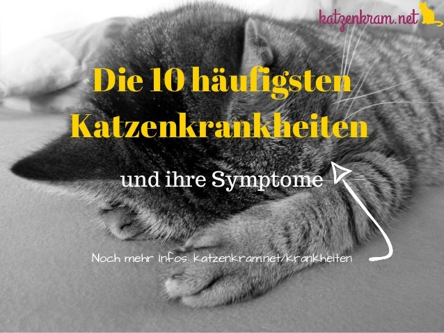 Die 10 häufigsten Katzenkrankheiten und ihre Symptome NochmehrInfos:katzenkram.net/krankheiten