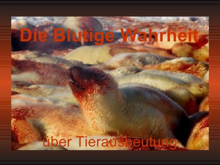 über Tierausbeutung Die Blutige Wahrheit
