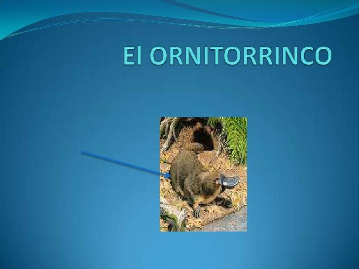 El ORNITORRINCO<br />