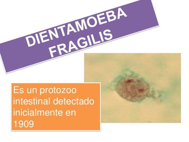 Es un protozoo intestinal detectado inicialmente en 1909