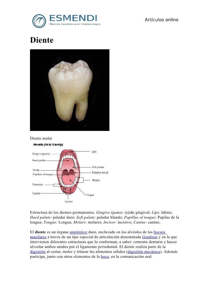 DienteDiente molarEstructura de los dientes permanentes. Gingiva (gums): tejido gingival; Lips: labios;Hard palate: palada...