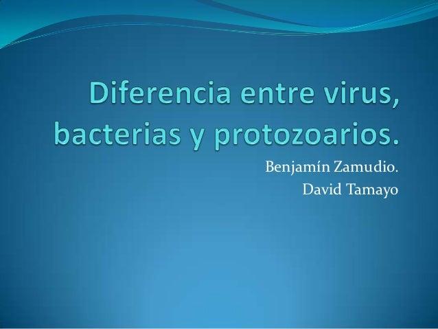 Diferencia entre virus bacterias y protozoarios for Diferencia entre yeso y escayola