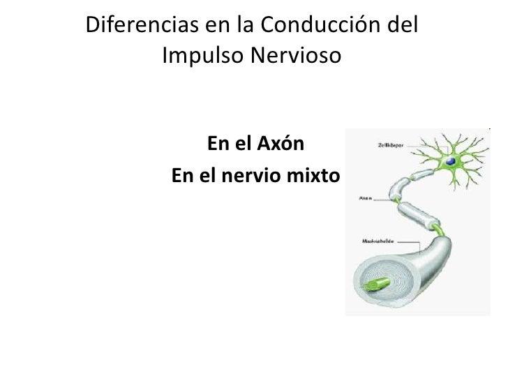 Diferencias en la conducción del impulso nervioso