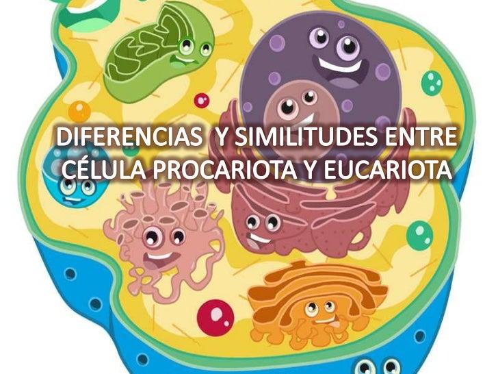 DIFERENCIAS Y SIMILITUDES ENTRE CÉLULA PROCARIOTA Y EUCARIOTA<br />