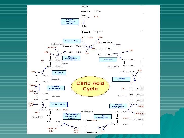 Diferentes formas del ciclo