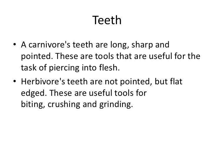 Carnivore teeth diagram difference between digestive tract of