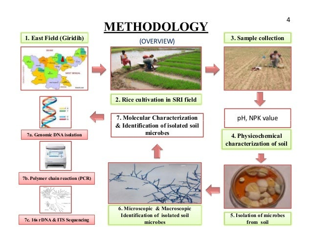 sri method of rice cultivation pdf