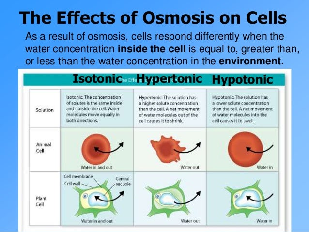 effects of osmosis