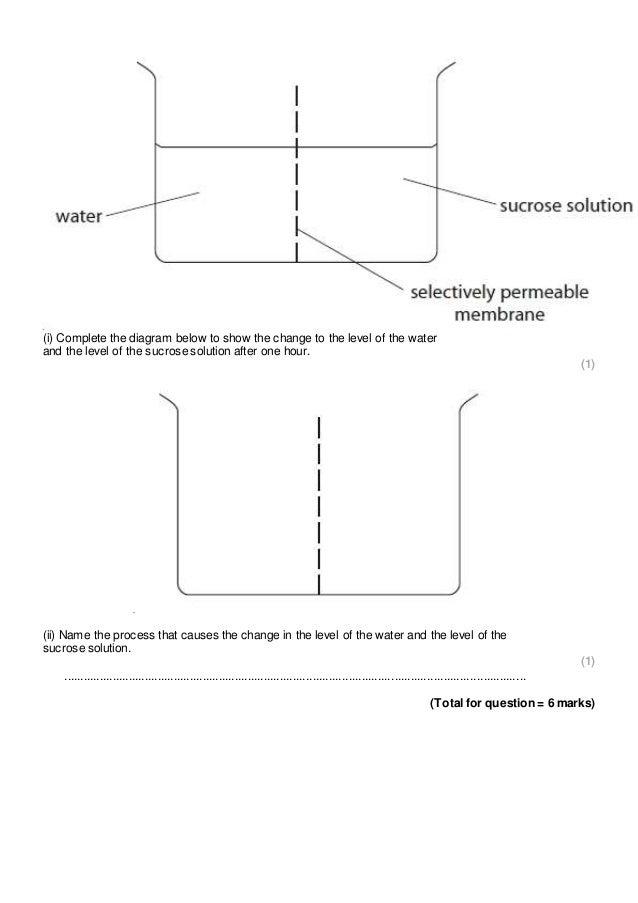 Osmosis And Diffusion Venn Diagram Passive Transport Diagram Best