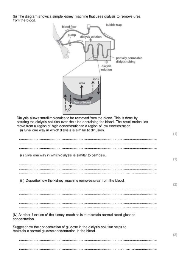 Ap biology essay questions diffusion osmosis