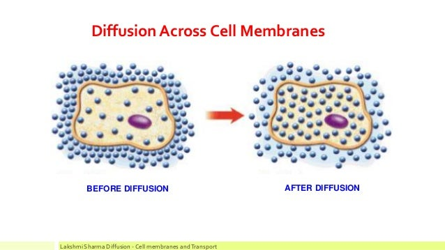 diffusion across biological membranes essay Biological membranes allow life as we know it to exist they form cells and enable separation between the inside and outside of an organism, controlling by means of their selective permeability which substances enter and leave.