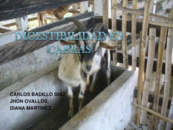 DIGESTIBILIDAD EN CABRAS<br />CARLOS BADILLO DIAZ<br />JHON OVALLOS<br />DIANA MARTINEZ<br />