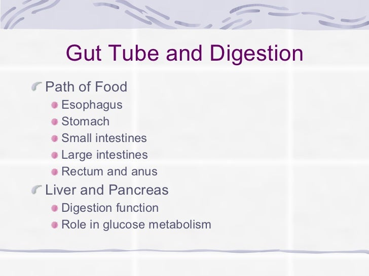 Gut Tube and Digestion <ul><li>Path of Food </li></ul><ul><ul><li>Esophagus </li></ul></ul><ul><ul><li>Stomach </li></ul><...