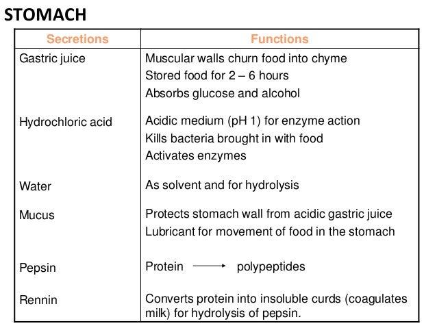 Rennin enzyme