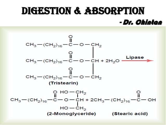 Digestion & Absorption - Dr. Chintan