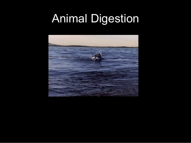 Honors - Digestion 1011