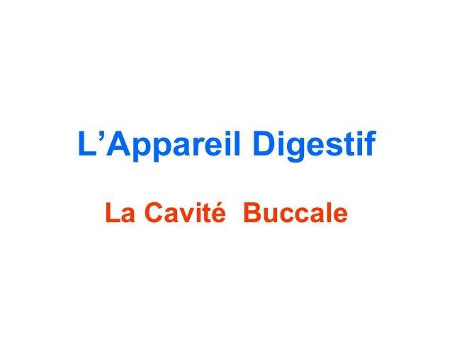 L'Appareil Digestif La Cavité Buccale