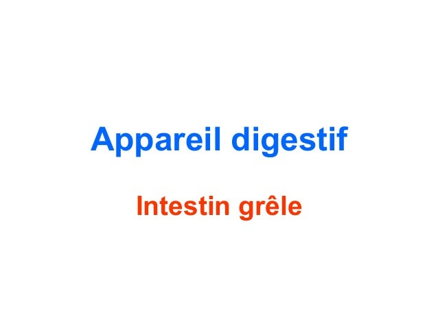 Appareil digestif  Intestin grêle