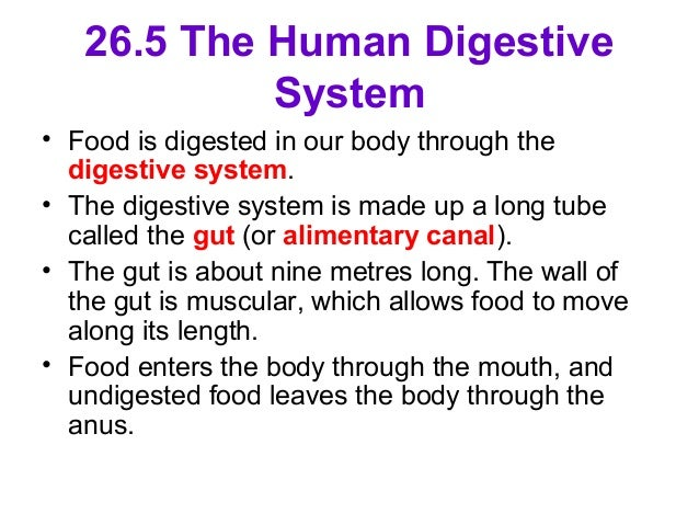 digestion test in humans Documents similar to csec biology - digestion test skip carousel cape 2 biology transport in plants and humans worksheet parenchyma,collenchyma and.