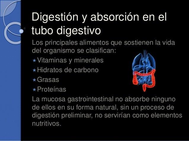 Digestión y absorción en el tubo digestivo Los principales alimentos que sostienen la vida del organismo se clasifican: V...