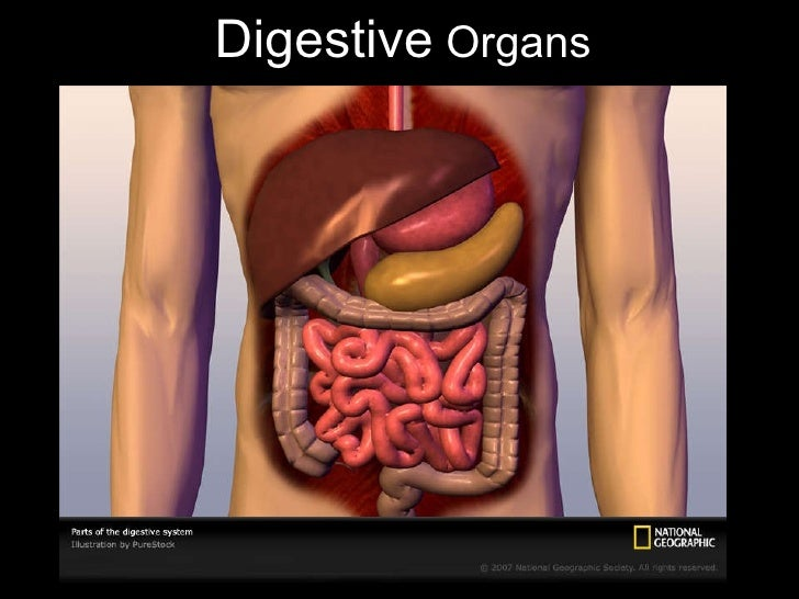 Digestion powerpoint