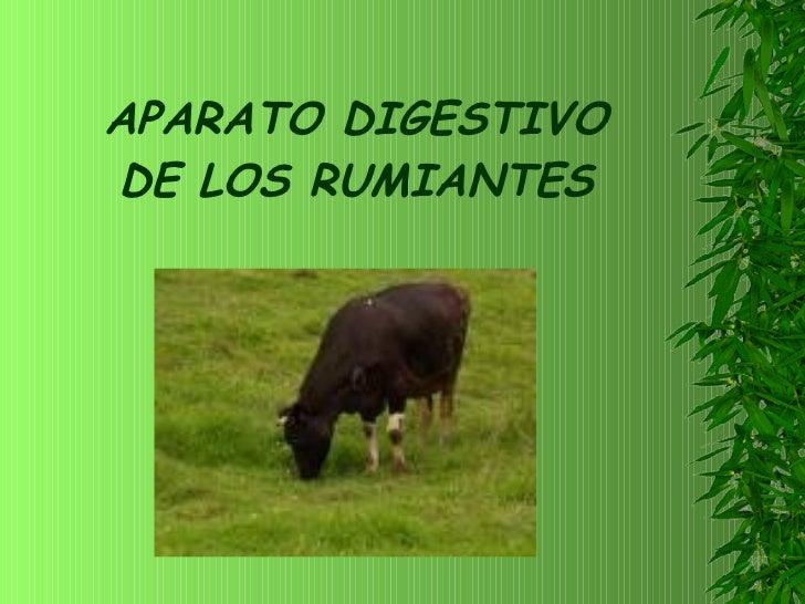APARATO DIGESTIVO DE LOS RUMIANTES