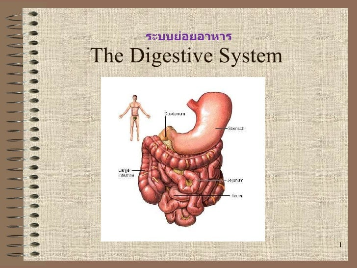 Digestivesystem