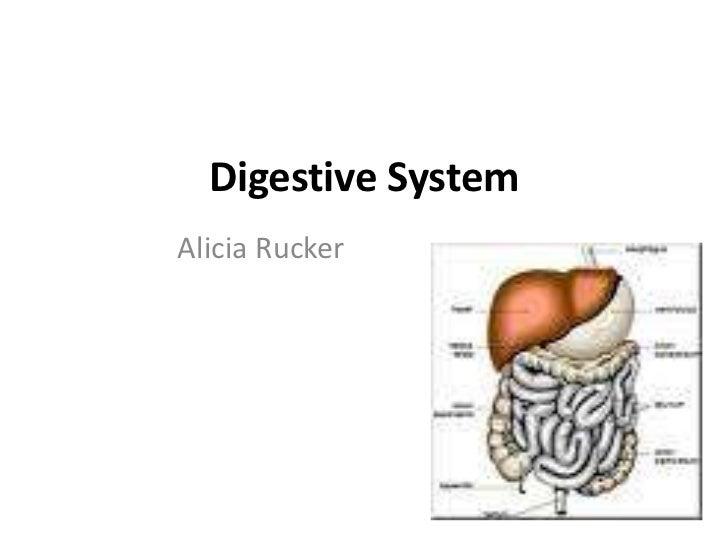 Digestive System<br />Alicia Rucker<br />