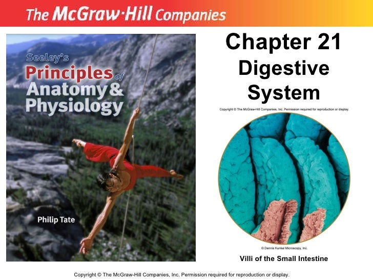 Copyright  ©  The McGraw-Hill Companies, Inc. Permission required for reproduction or display. Chapter 21  Digestive Syste...