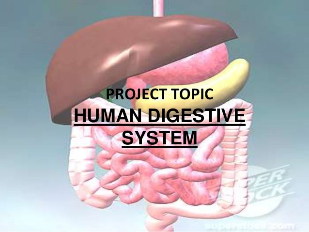 PROJECT TOPIC  HUMAN DIGESTIVE SYSTEM