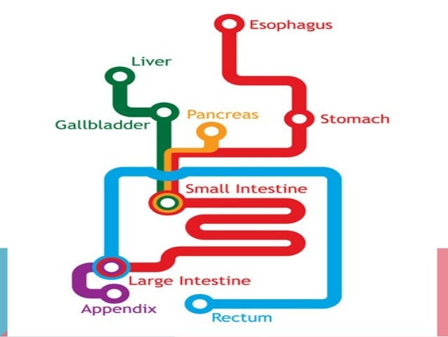 Human Digestive System•Digestion is the process of breaking down largefood molecules into smaller soluble molecules thatca...