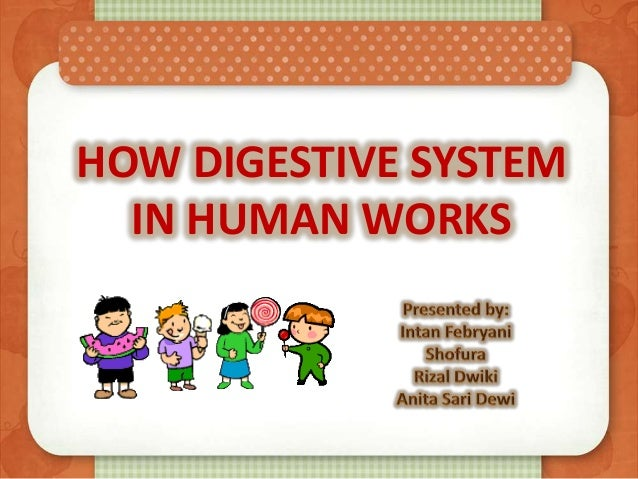 HOW DIGESTIVE SYSTEM IN HUMAN WORKS