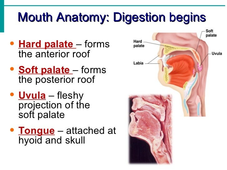 digestion notes Concise and high quality aqa as biology notes for organisms exchange  substances with their environment: digestion and absorption.