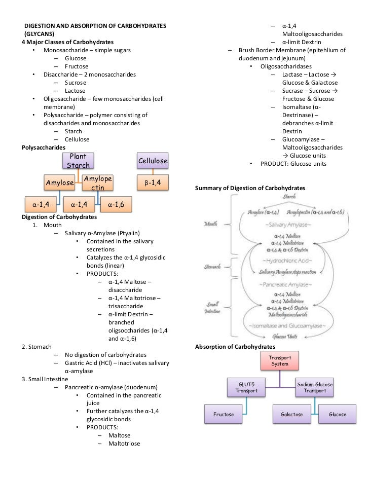 DIGESTION AND ABSORPTION OF CARBOHYDRATES                                               – α-1,4 (GLYCANS)                 ...