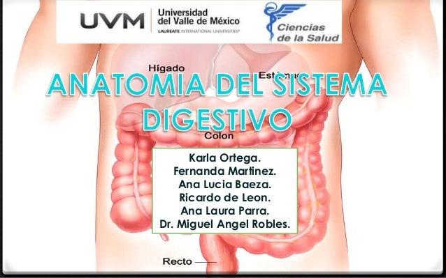 Karla Ortega.  Fernanda Martinez.  Ana Lucia Baeza.  Ricardo de Leon.  Ana Laura Parra.  Dr. Miguel Angel Robles.