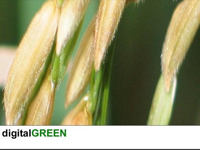 Digital green bhubaneswar
