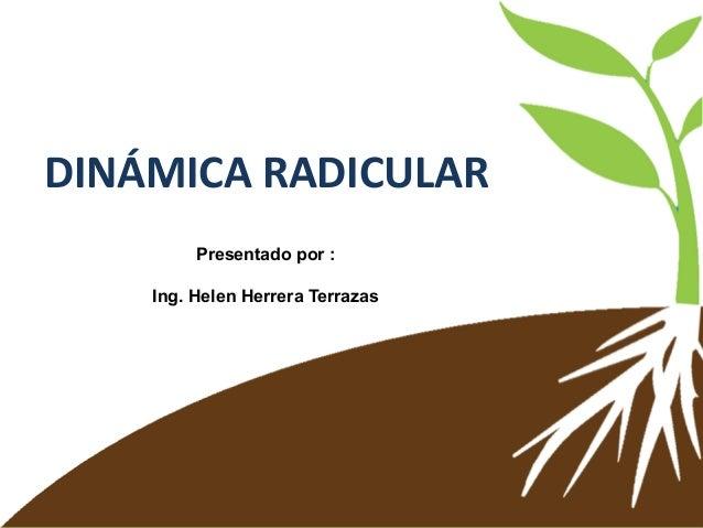 DINÁMICA RADICULAR Presentado por : Ing. Helen Herrera Terrazas