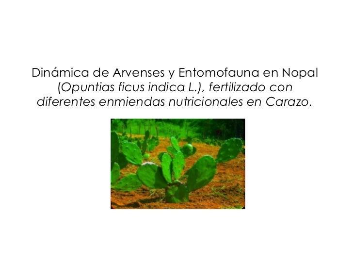 Dinámica de Arvenses y Entomofauna en Nopal ( Opuntias ficus indica L.), fertilizado con diferentes enmiendas nutricionale...