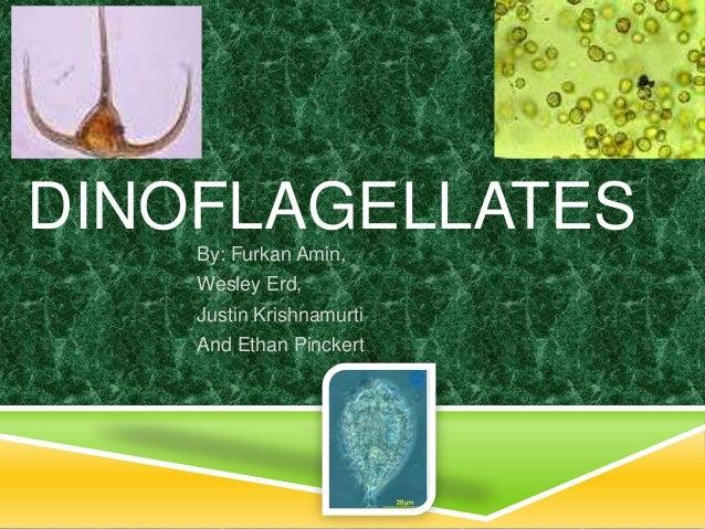 DINOFLAGELLATES    By: Furkan Amin,    Wesley Erd,    Justin Krishnamurti    And Ethan Pinckert