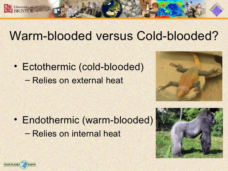 warm blooded or cold bloded essay With a few exceptions, all mammals and birds are warm-blooded, and all reptiles, insects, arachnids, amphibians and fish are cold-blooded what does it mean to be warm-blooded or.