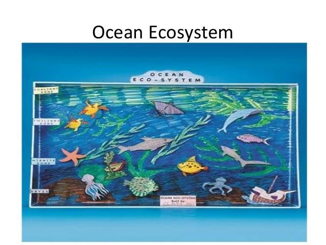 Ocean Ecosystem Drawing 5 Ocean Ecosystem
